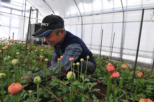 花き栽培の補償に期待