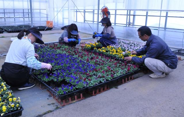 花壇苗70種類の周年栽培