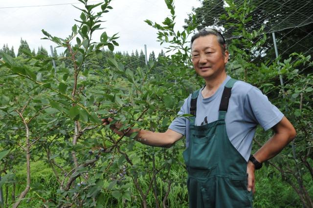 ブルーベリー6品種栽培