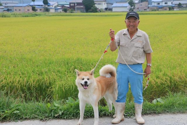 水稲と秋田犬の二刀流