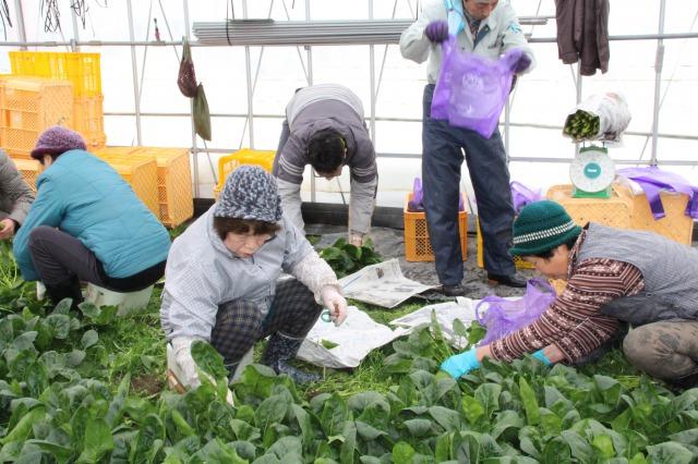 地域の日頃の感謝込めて 冬に野菜の直売会