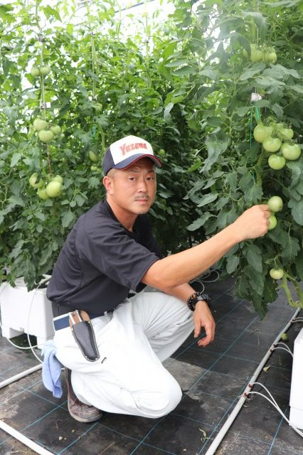 大玉トマト トロ箱養液栽培システム「うぃずOne」