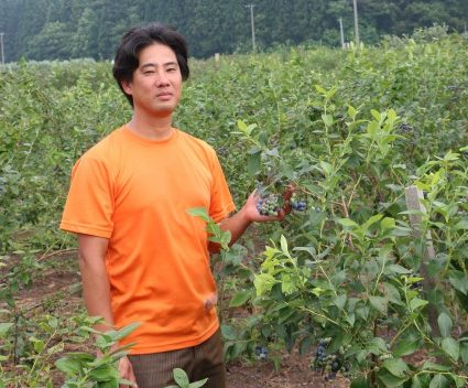 ブルーベリー収穫最盛