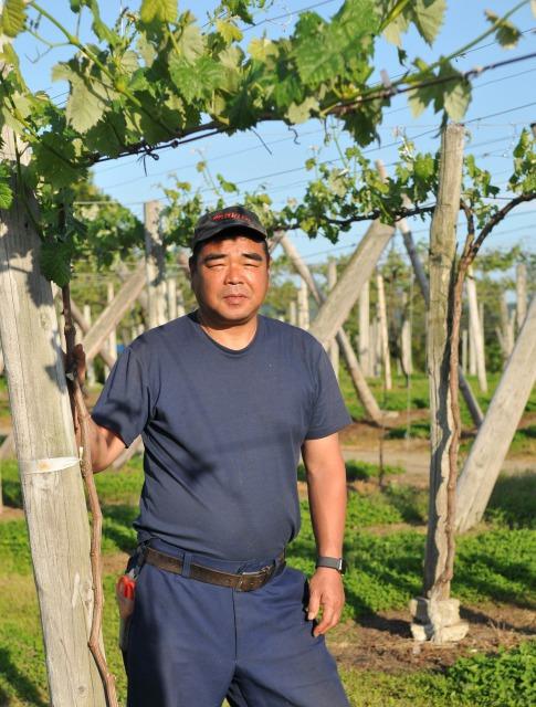 夏の低温でブドウ生育障害